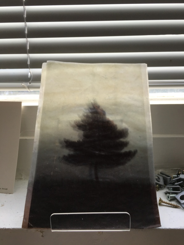 trees on the windowsill in the office (work by Sophie Chippett)