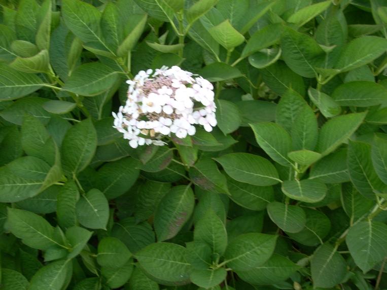 Blüte im Busch