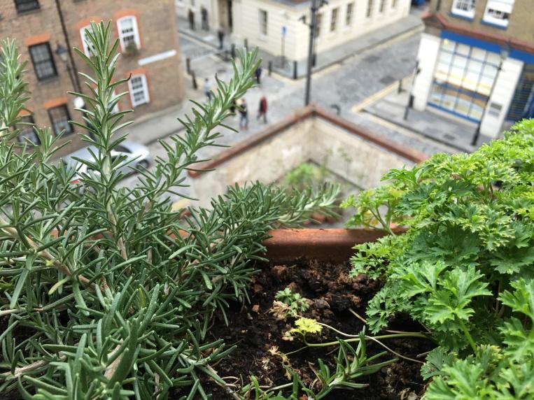 rosemary and parsley