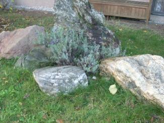 Busch und Steine