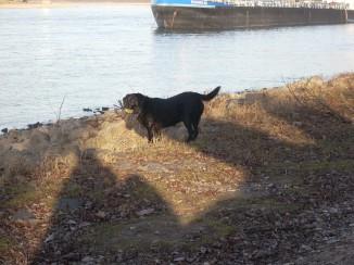 Spaziergang am Rheinufer
