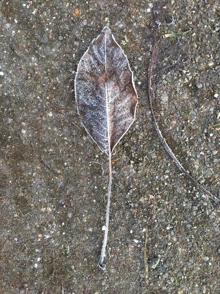 gefrorenes Blatt