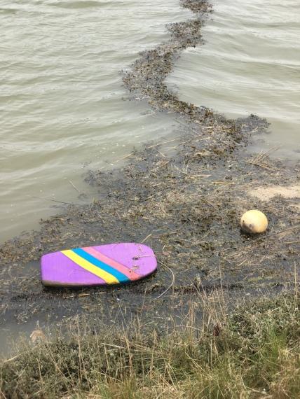 surf board, buoy and seaweed