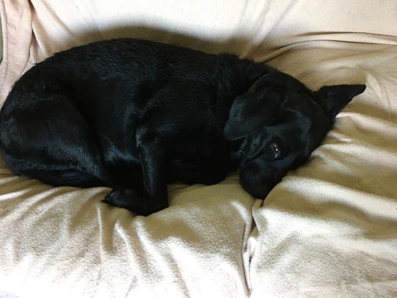 Olive asleep