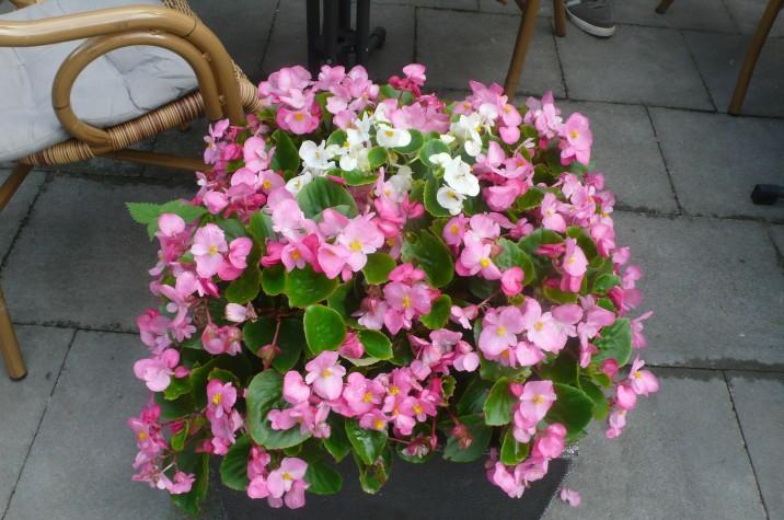Blumen von oben